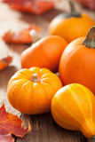 Mini pumpkins on wooden background Royalty Free Stock Image