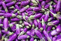 Mini purpere aubergines Stock Foto's