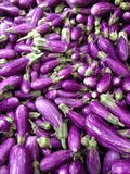 Mini purpere aubergines Stock Foto