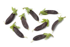 Mini purple snow peas Royalty Free Stock Image