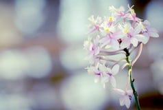 Mini- purpurfärgad orkidé och tappningljus Arkivfoton