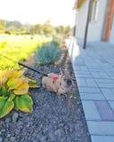 Mini Rabbit-aard royalty-vrije stock foto