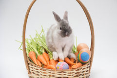Mini rabbit with carrots and easter egg on basket Royalty Free Stock Image