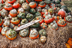 Mini Red Turban Pumpkin Photos libres de droits