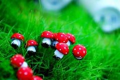 Mini rode paddestoelen en groen gras stock fotografie