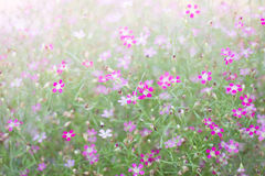 Mini romantic pink spring flowers Stock Photos
