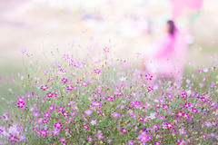 Mini romantic pink spring flowers Royalty Free Stock Image