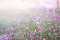 Mini romantic pink spring flowers Stock Image