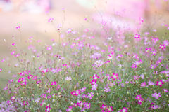 Mini romantic pink spring flowers Royalty Free Stock Images