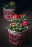 Mini Rosas Royalty-vrije Stock Afbeelding