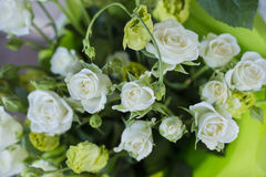 Mini rosas brancas Fotografia de Stock