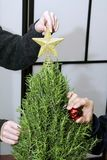 Mini Rosemary Christmas Tree being Decorated with Gold Star Ornaments in Studio with a Gold Star. Youthful Asian students decorate a miniature Christmas tree Royalty Free Stock Photo