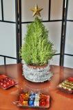 Mini Rosemary Christmas Tree Ready voor Kleurrijke Decoratie op het bureau Stock Foto