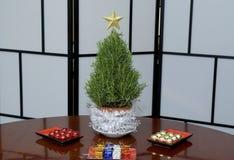 Mini Rosemary Christmas Tree in Studio met een Gouden Ster Royalty-vrije Stock Foto's