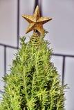 Mini Rosemary Christmas Tree in Studio met een Gouden Ster Stock Foto's