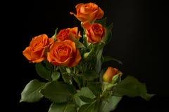 Mini roses bush Stock Photos