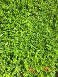 mini rosso per verde fotografia stock