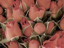 Mini rozen Royalty-vrije Stock Foto