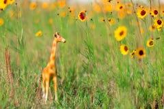 Miniature giraffe figurine in grass and yellow flowers like a mini safari. royalty free stock images