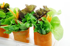 Mini salade Photo stock