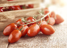 Mini san marzano tomatoes on the vine. Lying on a wooden surface in front of a small wooden crate full f ripe fresh tomaoes Stock Image