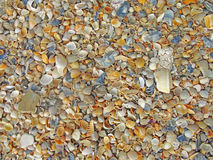 Mini Seashells Royalty Free Stock Photos
