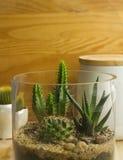 Mini-serre succulente Photo libre de droits