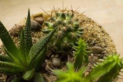 Mini-serre succulente Images stock