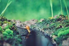 mini slug looking for a drink stock photos