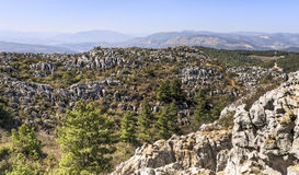 Mini Stone Forest of Limestone. The Mini Stone Forest atop West Mountain in Kunming sprawls with sharp limestone rocks and stunted pine trees in Yunnan province Stock Image