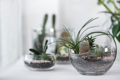 Mini succulent garden in glass terrarium. On windowsill stock photos