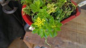 Mini succulents Photographie stock libre de droits