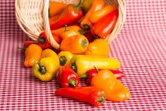 Mini Sweet Bell Peppers Spilling fuera de la cesta de mimbre Imagen de archivo libre de regalías