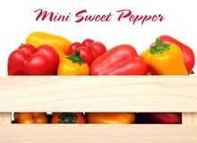 Mini sweet peppers royalty free stock photography