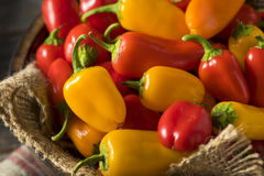 Mini Sweet Peppers orgánico crudo Fotos de archivo libres de regalías
