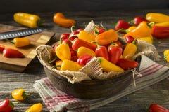 Mini Sweet Peppers orgánico crudo Fotografía de archivo