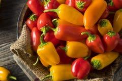 Mini Sweet Peppers orgánico crudo Imagenes de archivo