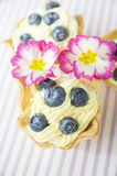 Mini tart with cottage cheese cream and blueberries Royalty Free Stock Photo