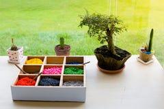 mini terrarium Imagens de Stock Royalty Free