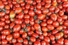 Mini tomaat Royalty-vrije Stock Afbeeldingen