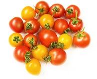 Mini tomaat Stock Afbeelding