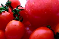 Mini tomates vermelhos e um tomate grande imagem de stock royalty free