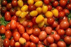 Mini tomato. Background mini many  tomato colorful Stock Photo