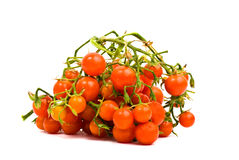 Mini tomatoes Stock Image