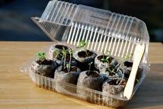 Mini- växthus Royaltyfri Fotografi