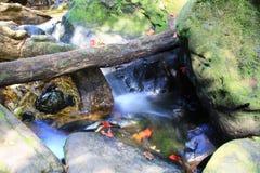 Mini- vattenfall Royaltyfri Bild