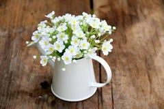 Mini- vit blomma i vas Arkivbild