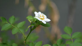 Mini- vitros Royaltyfria Bilder