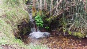 Mini Waterfall Spilling in Pool stock footage