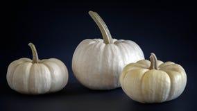 Mini white pumpkins Stock Images